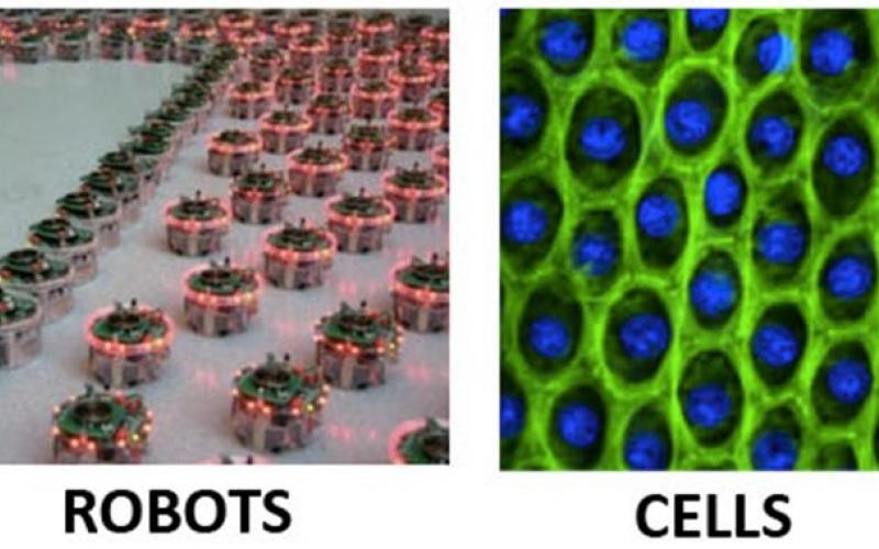CellsRobots